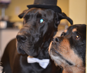 Ike & Mambo – another year of humiliating costumes (Tuxedo Dane & Uncle Sam)